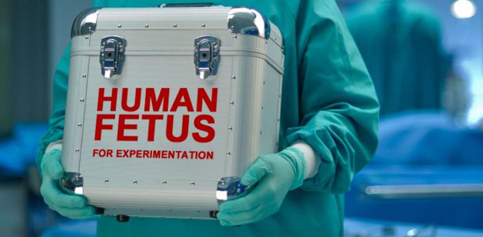 HumanFetus
