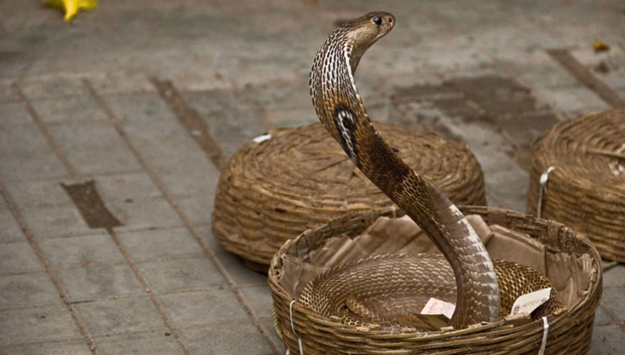 A Basket of Dreadfuls
